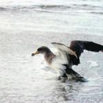 """Gestão pesqueira tem de ser repensada para evitar rutura de """"stocks"""" na costa"""