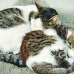 PSP identifica homem que matou gato com uma enxada