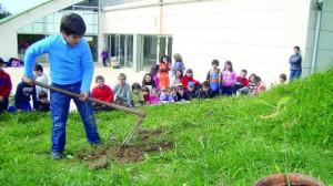 11 plantação de arvores na mealhada dr