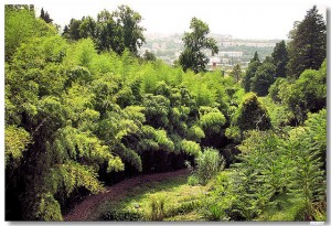 Mata Botânico