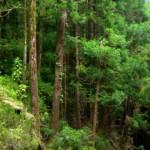 Especialistas debateram em Coimbra estratégias para o país no ordenamento florestal