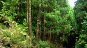 floresta3