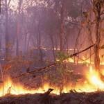 Incêndio florestal em Góis mobiliza 148 bombeiros