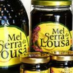 Procura de mel certificado da Serra da Lousã diminui com falta de visitantes