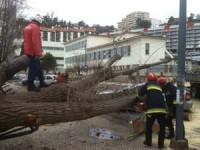 Árvore de grande porte cai na rua General Humberto Delgado (com fotos)