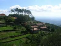 Voluntários devolvem dez mil árvores à Serra do Caramulo, em Tondela