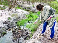 Cadáver de animal enterrado em vala de água em Arazede