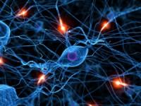 UC procura voluntários para estudar impacto  da velhice no cérebro
