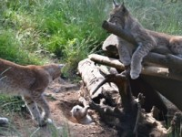 Maior mostra da vida selvagem do país no Parque Biológico da Serra da Lousã