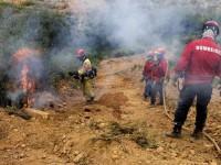 Dois jovens a brincar com o fogo destruíram 2,5 hectares de floresta