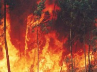 Investigador defende sensores de infravermelhos para diminuir risco de incêndio florestal