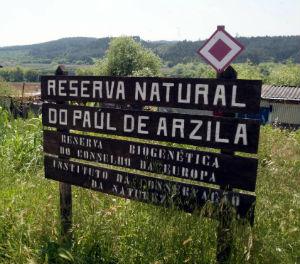 PAUL DE ARZILA LC