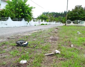Despiste de camião  mata jovem na Tocha
