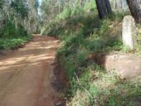 Cultura do Centro nega que calçada arrancada em Almalaguês seja romana