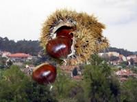 Bodo das Castanhas em Vermoil de 24 a 26 de outubro