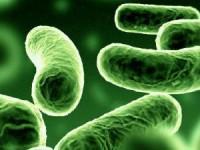 Legionella: Duas pessoas internadas em Castelo Branco