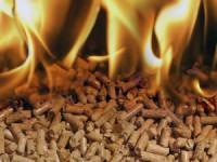 """Fábrica de """"pellets"""" para aquecimento ajuda a limpar áreas florestais na Guarda"""
