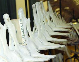 Galeria de Zoologia de Coimbra serve de cenário para viagem pelos Lusíadas