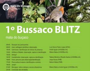 bussaco BLITZ