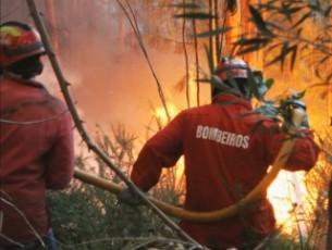 Floresta na zona de Almeida ardeu durante oito horas