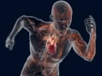 Forma física afeta decisivamente o risco cardiovascular