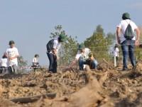 Centenas de pessoas na Serra da Lousã para limpar a floresta