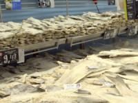 ASAE apreende 26 toneladas de bacalhau e paloco em Ílhavo