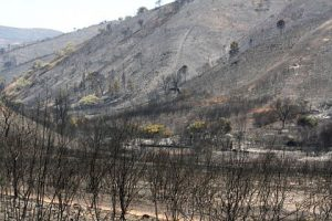 ARS Centro avalia impacto do fogo nos pulmões dos madeireiros
