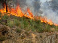 Incêndio em Pedrógão Grande ameaça habitações e corta trânsito no IC8