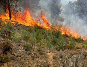 Fogo florestal provoca um morto em Mangualde