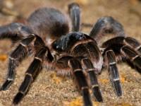 Universidade de Aveiro desenvolve jogo que ajuda a controlar fobia a aranhas