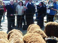 Rebanho de ovelhas da Serra da Estrela em Lisboa para promover a Festa do Queijo de Oliveira do Hospital