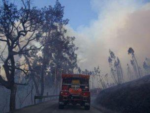 Especialistas pedem testemunhos sobre incêndios de Pedrógão