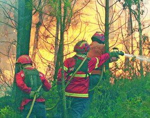 Fogo desaloja duas pessoas em aldeia de Miranda do Corvo