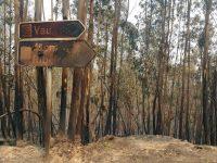 Um ano depois, Arouca e S. Pedro do Sul recuperam dos incêndios