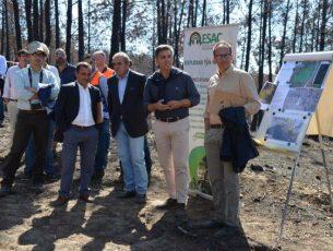 Grupo de trabalho com mandato de quatro anos para recuperar a floresta