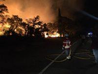 Fogo em Condeixa-a-Nova destruiu áreas de olival e vinha