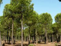 Governo prevê ampliar floresta pública nos próximos anos