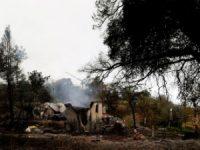 Incêndios: Recuperação avança mais depressa do que o esperado em Oliveira de Frades e Mira