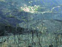 Agricultores afetados pelos incêndios começaram a receber pagamentos
