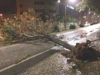 Mau tempo provocou 167 quedas de árvores no distrito de Coimbra