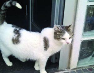 Recursos para Tribunal da Relação da sentença que absolveu homem acusado de enforcar gata
