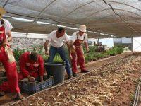 Jardinagem inclusiva executada pela Associação de Paralisia Cerebral