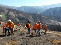 Dez mil árvores plantadas no fim de semana em Arganil