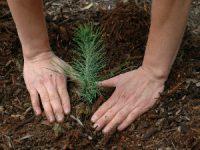 Câmara de Pedrógão Grande vai coordenar voluntários para a reflorestação