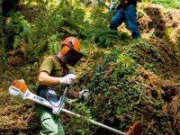 Populações de Castanheira e Pedrógão empenhadas na limpeza do que sobrou da floresta