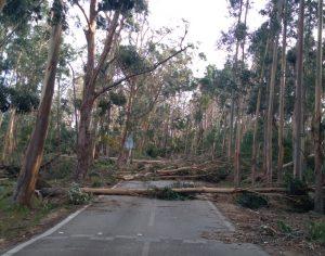 Serra da Boa Viagem, na Figueira da Foz, destruída pela tempestade Leslie