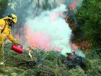 """Bombeiros e técnicos vão limpar terrenos com """"fogo controlado"""""""