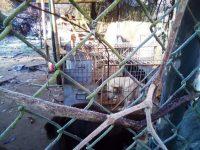 Cães em risco no abrigo da Câmara de Miranda do Corvo foram transferidos para o canil de Coimbra