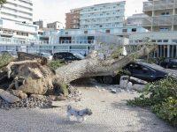 Condeixa e Figueira da Foz queixam-se de falta de apoios para recuperar da tempestade Leslie
